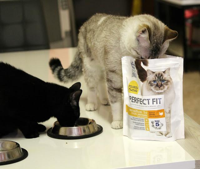 gatto nero gatto che mangia alimenti secchi