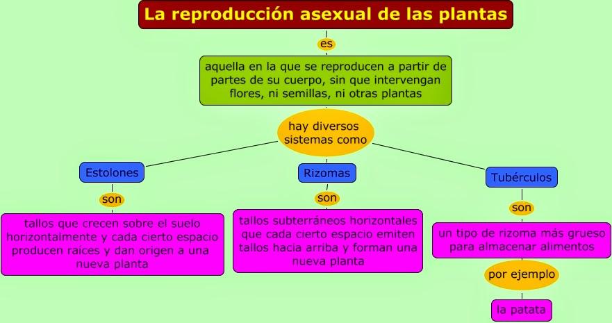 Reproduccion asexual de las plantas definicion de comunicacion