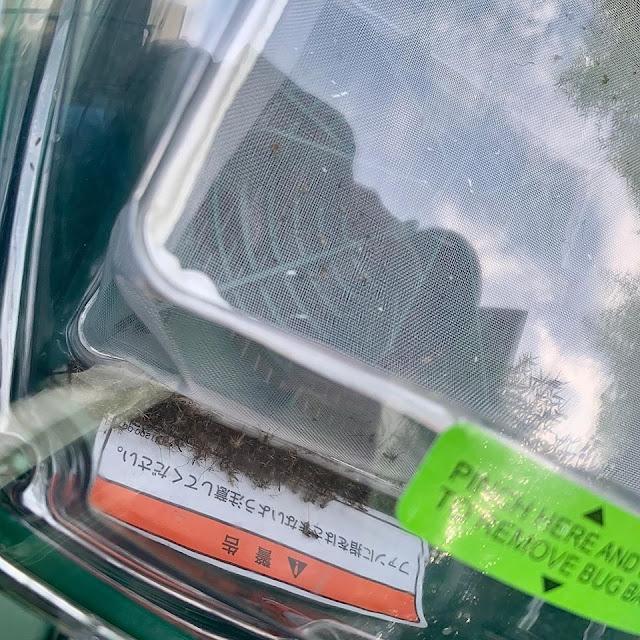 蚊取り装置(モスキートマグネット)の状況(設置後48時間経過)