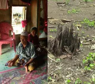 Sejarah Pohon Asam Merdeka atau Mangge Ra'a