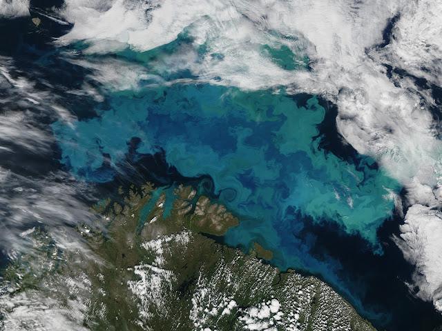 Mar turquesa, cocolitóforos