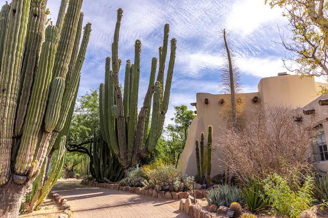 desertbotanicalgarden, tempearizaon, arizonatravel, holidaytravel
