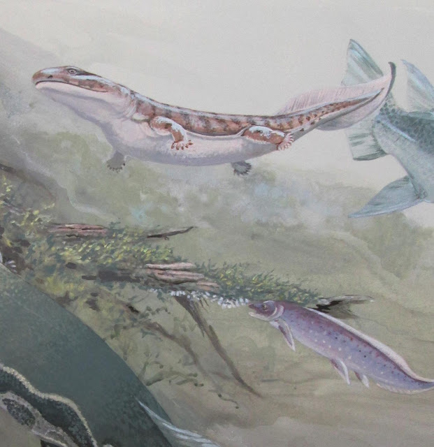 Fossil expands ancient fish family tree