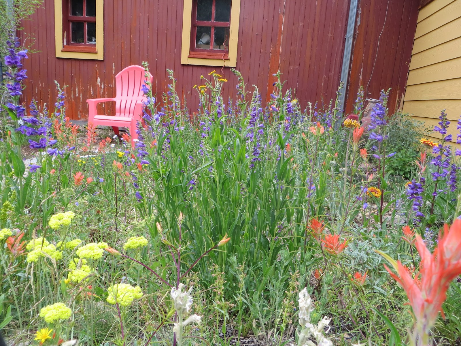 Colorado mountain gardener for Landscaping with native plants