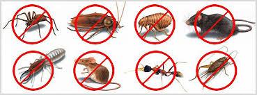 شركة مكافحة حشرات بالقنفذة,رش المبيدات فى القنفذة