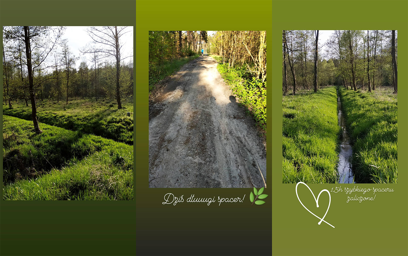 spacer do lasu przegląd miesiąca