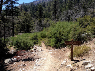 View southwest on Windy Gap Trail, below the first crossing of South Mount Hawkins Fire Road, Crystal Lake, Angeles National Forest