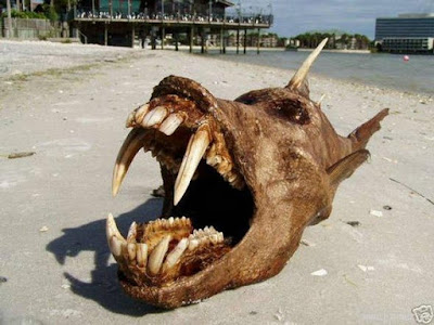 Washed up on a beach is a ugly Hell fish.