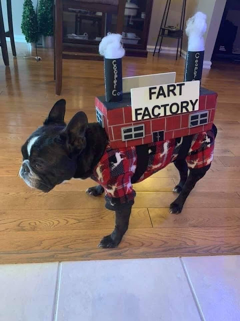 Funny Fart Factory Dog Costume Picture