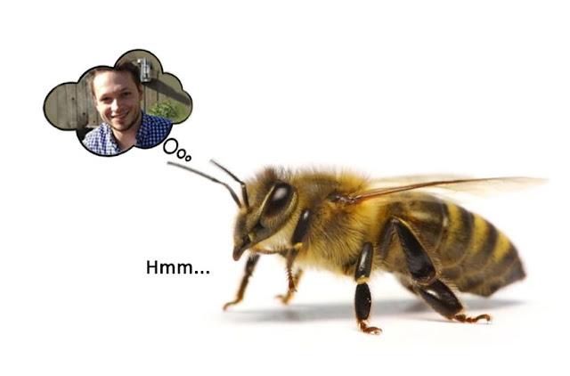 Οι μέλισσες έχουν μνήμη;