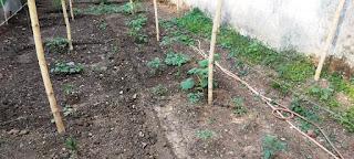 छोटी सी जमीन को बना दिया सब्जियों का खजाना
