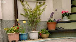 Plants growing in pots