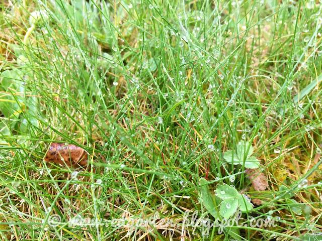 Regentropfen am Gras