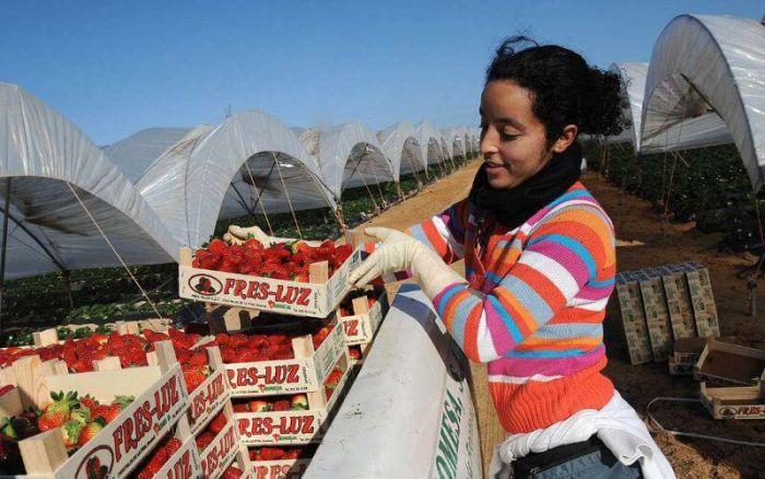 15.000 Marocaines en Espagne pour travailler dans les champs des fruits rouges