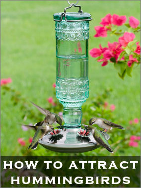 Attract hummingbirds with this DIY bottle creation.