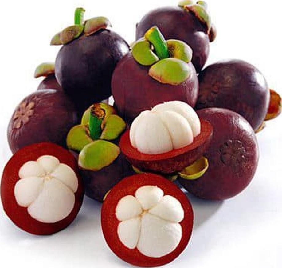 bibit manggis bibit buah tanaman Sumatra Utara