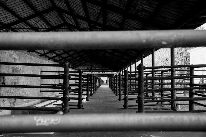 Hajmeresztő, megdöbbentő, kegyetlen körülmények egy Fejér megyei vágóhídon