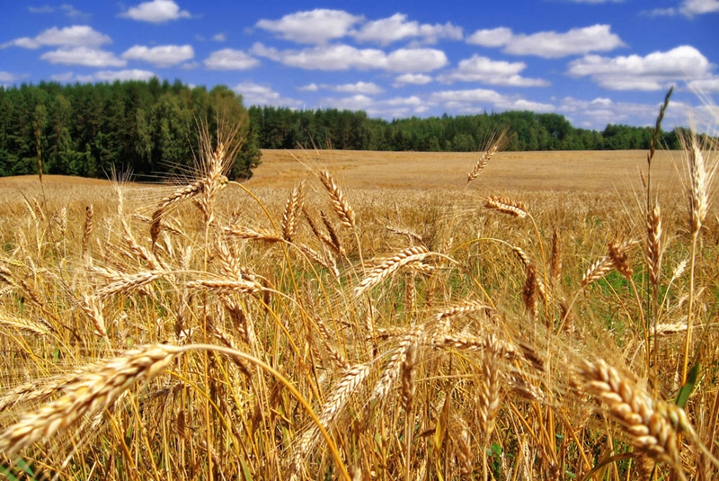 """""""Toprağımızı korumak için araziye uygun ürün ekimi gerçekleştirmeliyiz"""""""
