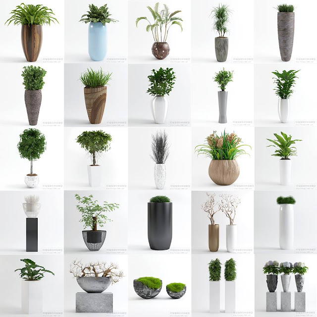 23  Plants Free Sketchup Model