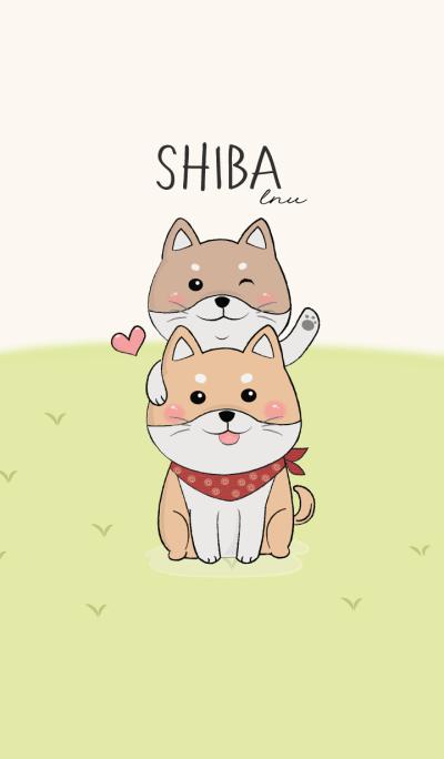 Shiba lnu dog cute