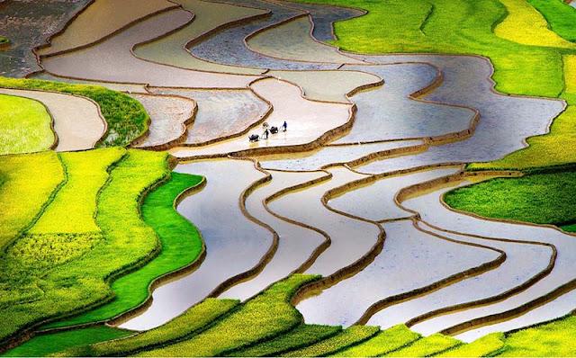 Thung lũng Tú Lệ - nơi gieo trồng giống lúa Tú Lệ thơm ngon nổi tiếng