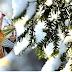 13 СІЧНЯ – ДЕНЬ СВЯТОЇ МЕЛАНІЇ ТА ЩЕДРИЙ ВЕЧІР: НАРОДНІ ПРИКМЕТИ