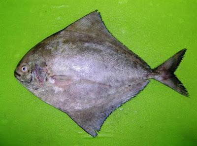 Jenis Ikan di Pantai Depok yang Pernah Saya Beli