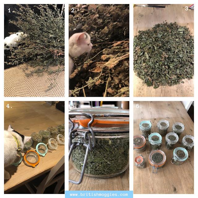 prepping catnip for storage, cutting catnip, dried catnip, storing catnip