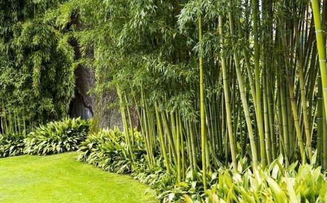 Bamboo in the Garden | Organic Gardening