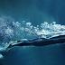Manusia Bernafas Dalam Air di Masa Depan Ilmuwan Berkata Demikian