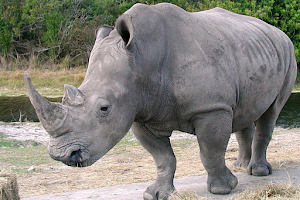 Kewajiban Manusia terhadap Hewan yang Terancam Punah