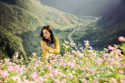 Hà Giang đẹp rạng rỡ với lễ hội hoa tam giác mạch 3