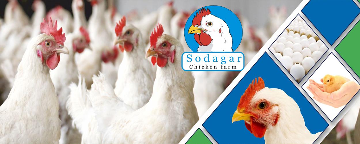 Mehar Sodagar Poultry Farm