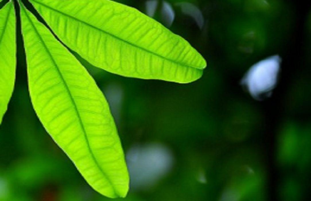 Les facteurs structuraux de la transpiration de la plante for Plante 8 feuilles
