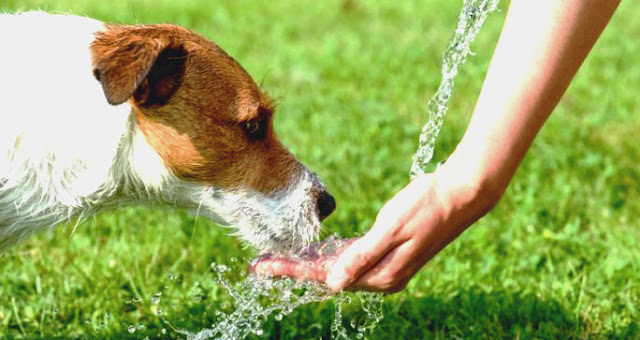 How to keep your dog cool in summer heat ?