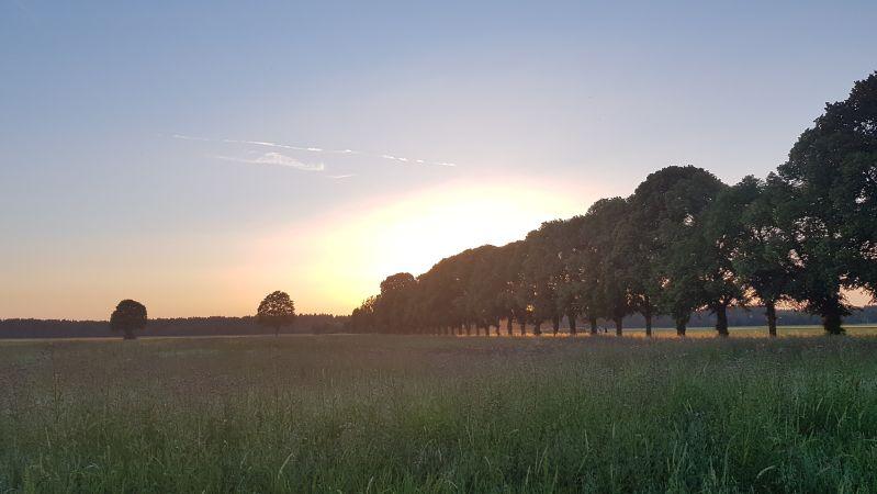 Sonnenuntergang über einer Bienenwiese