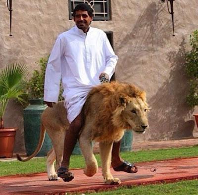 Thú chơi sư tử ở Ả Rập