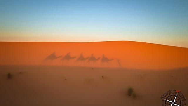 paseo en dromedario por las dunas