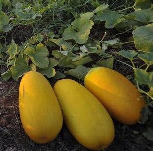 healthnote25,manfaat-buah-blewah-bagi-kesehatan