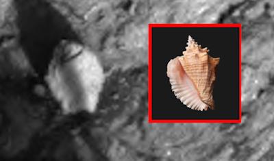 nouvel ordre mondial | Deux coquillages découverts sur Mars par Curiosity