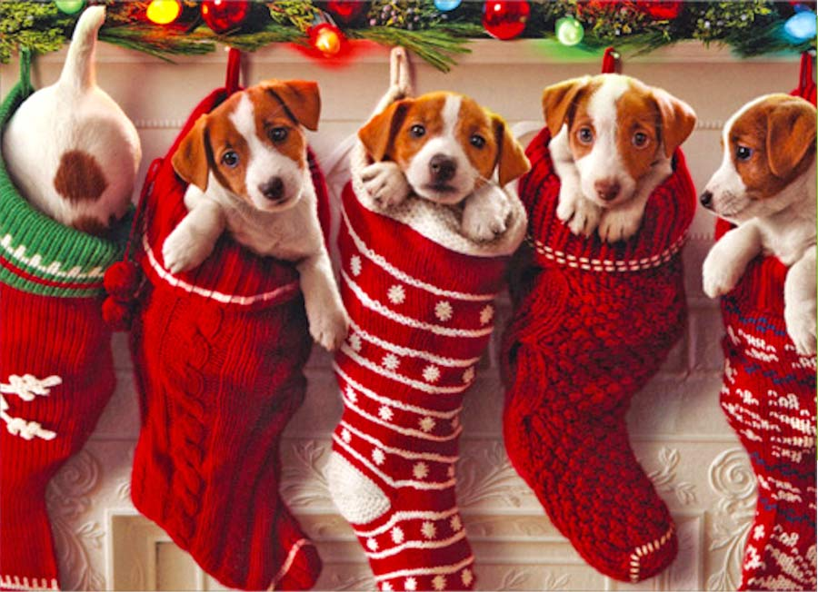 Test: ¿Cuál animal espiritual navideño eres?