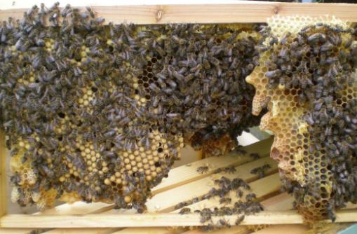 Μελισσοκομικές απορίες και εξηγήσεις