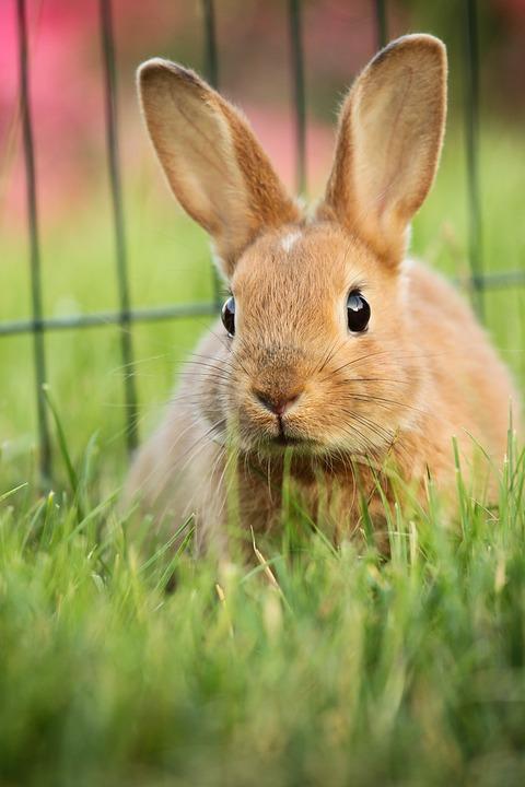 konijn adopteren