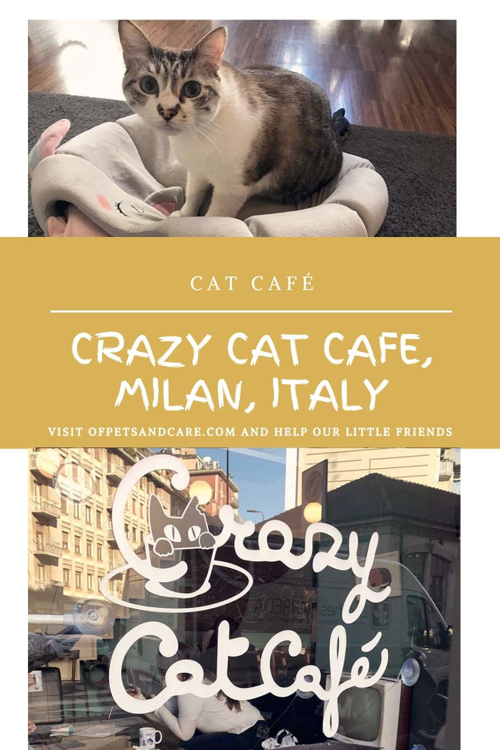 Crazy Cat Cafe in Milan,