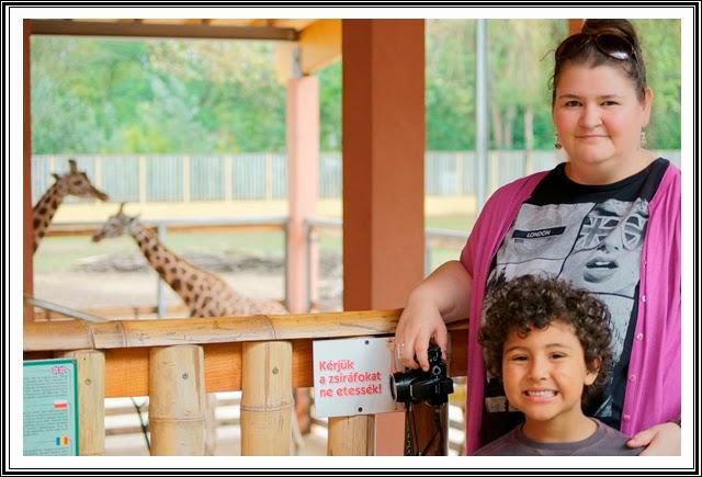 zoo-Nyiregyhaza-girafe