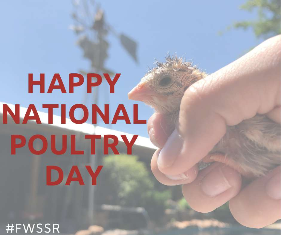 National Poultry Day Wishes For Facebook