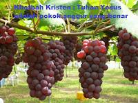 Khotbah Kristen : Tuhan Yesus adalah pokok anggur yang benar