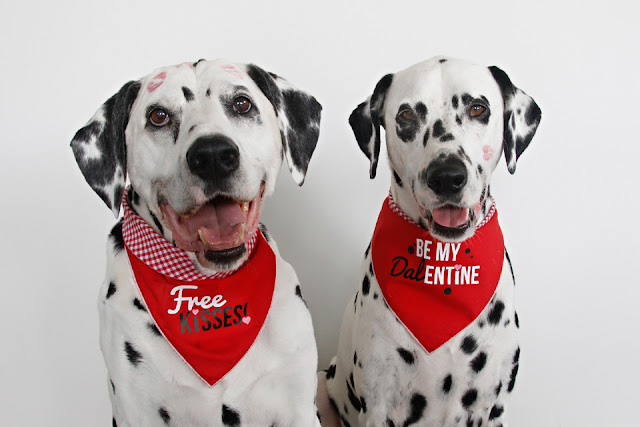Dalmatian dogs with lipstick kiss marks modelling DIY Valentine's Day dog bandanas with iron-on text