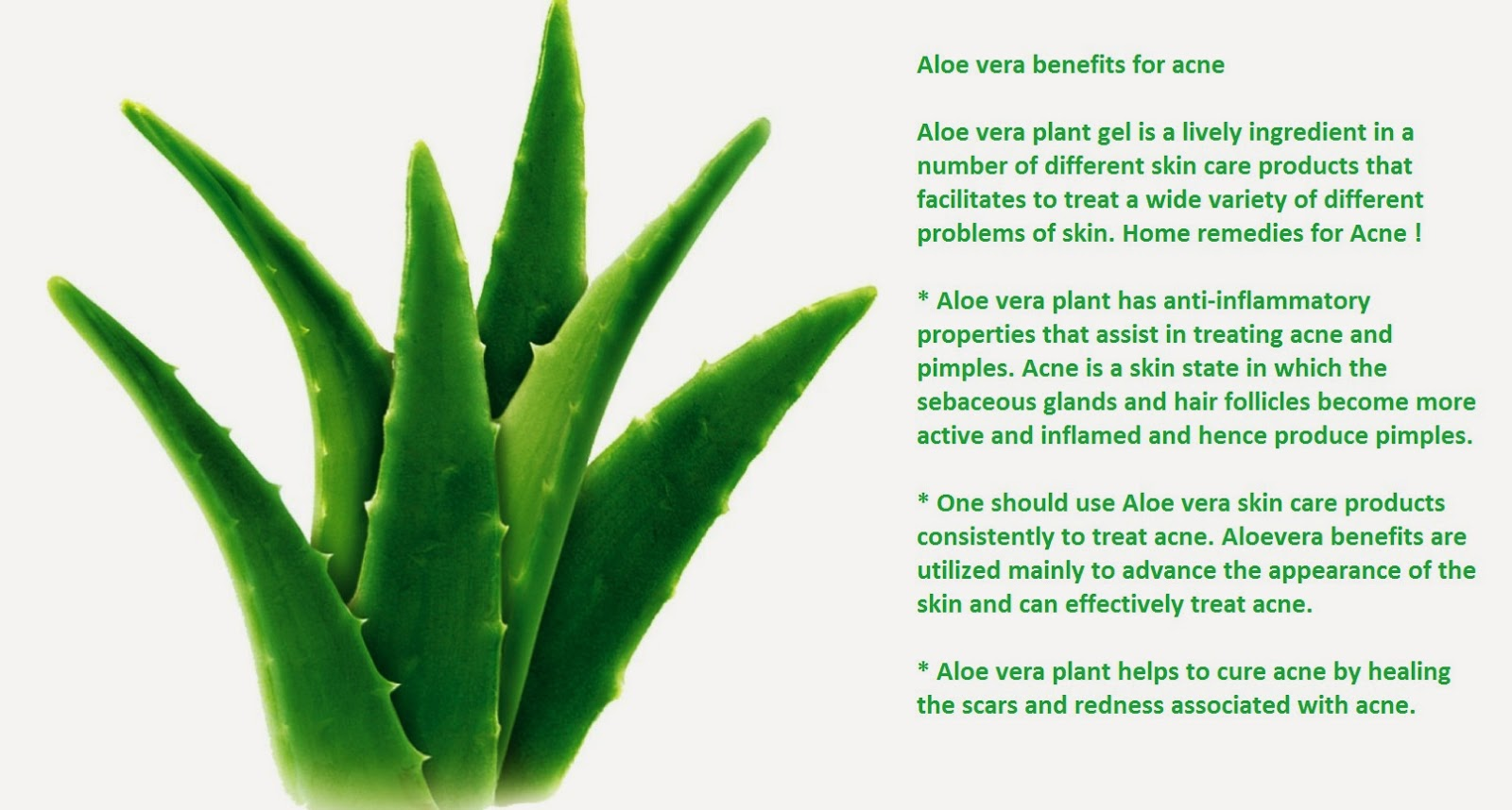 health benefits of aloe vera aloe vera plant gel is an enthusiastic
