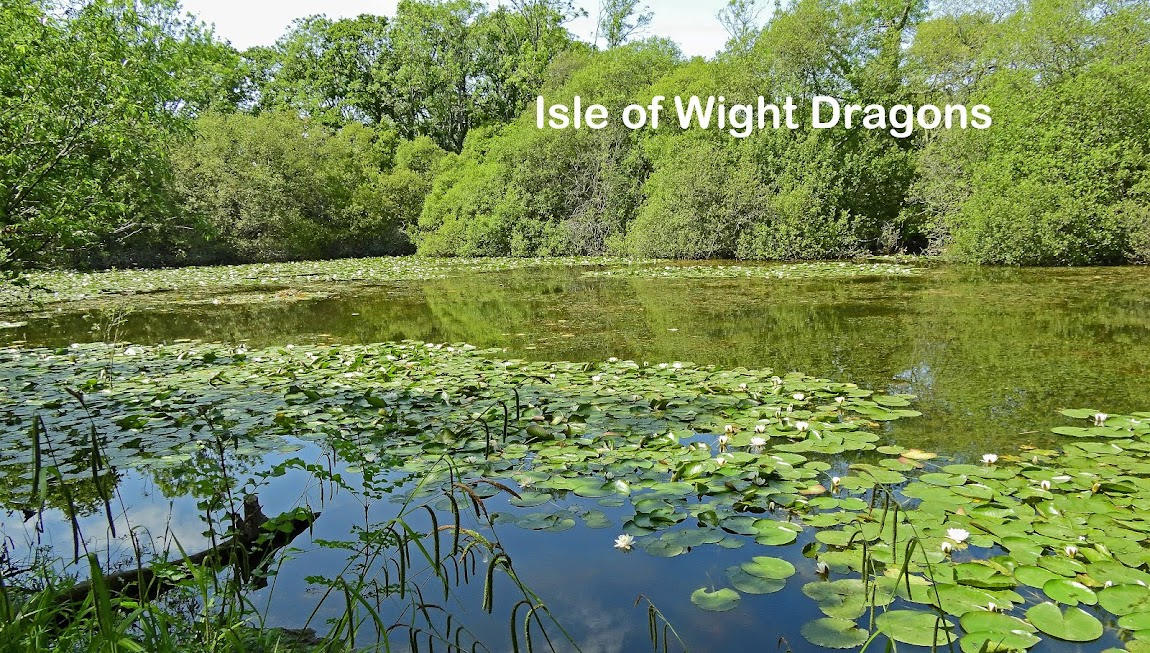 Isle of Wight Dragons